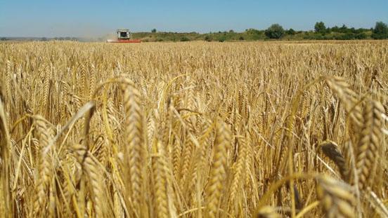 Der DBV stellt seinen abschließenden Erntebericht 2015 vor