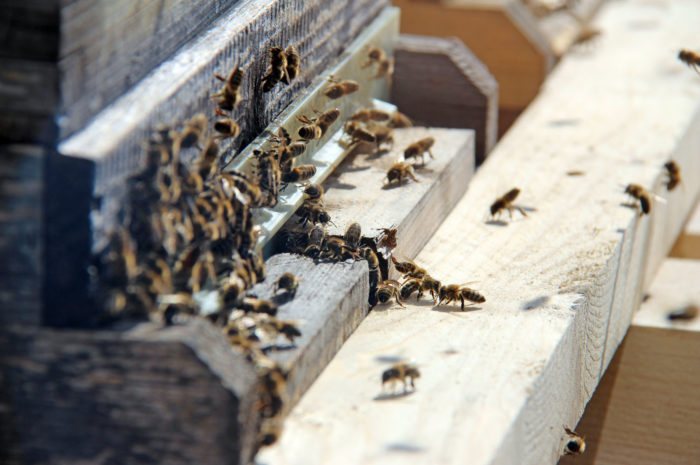 Es summt und brummt: Beste Bedingungen für 150.000 Bienen bei Lotto Bayern