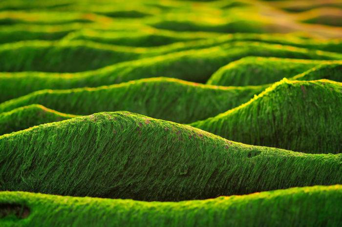 Bioökonomie: Verpackungen für Lebensmittel aus Meeresalgen