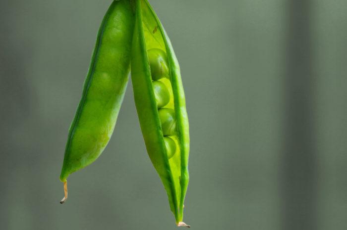 Der vegane Protein Max: Echt stark. 100 % pflanzlich.